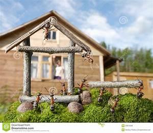 Ameisen In Der Wand : team der ameisen die haus teamwork konstruieren stockfoto bild von team umgebung 25810566 ~ Frokenaadalensverden.com Haus und Dekorationen
