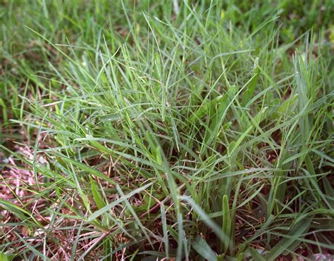 Which Grass Is Best For You? It All Depends