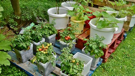 tips for growing in a container or patio garden san diego seed company