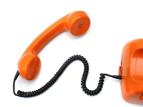 the phone animal communication consultation the phone