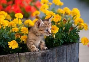 Welche Pflanzen Sind Nicht Giftig Für Katzen : chrysanthemen giftig f r katzen ~ Eleganceandgraceweddings.com Haus und Dekorationen