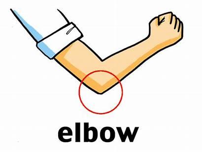 Elbow Clipart Clip Parts Meaning Language Flexion