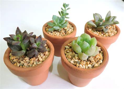 adorno  tu casa plantas faciles de cuidar suculentas  en mercado libre
