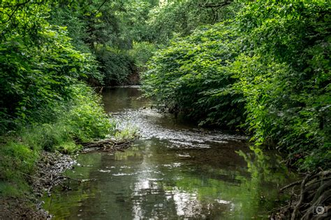 Forest River Background High Quality Free Backgrounds