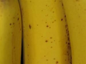 Fruit Fly Eggs In Bananas