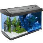 prix aquarium tom and co tetra aquarium goedkoop bij zooplus