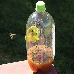 Fatal Funnel Wasp, Hornet and Yellow Jacket Trap