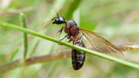 fliegende ameisen bekaempfen egarden