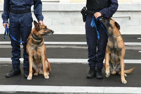 Devenir Maître-chien Gendarmerie