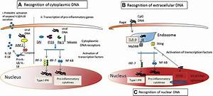 Republished: Innate and adaptive immune responses in ...