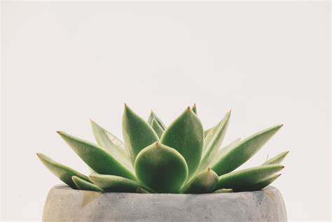 minimalist plants 500px blog 187 the passionate photographer community 187 grab your audience with clean minimalist