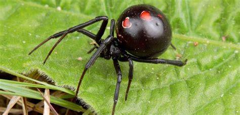 jeux de cuisine de 2014 il existe une araignée qui mange partenaire après l accouplement