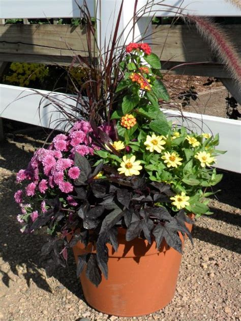 fall container planting ideas fall container garden ideas outdoors gardening pinterest