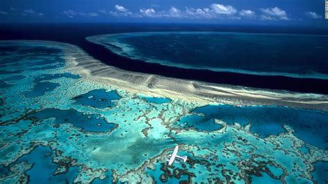 great barrier reef  literally  hot water opinion