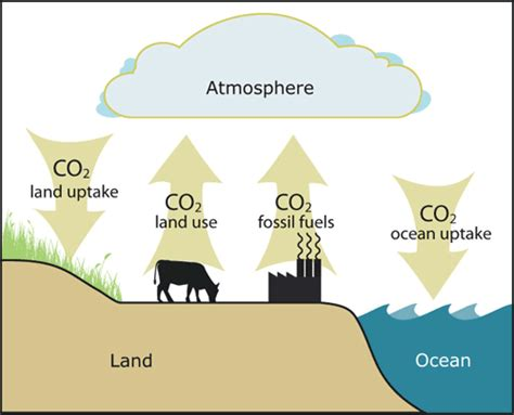 define the word carbon sink the carbon cycle part 3 copy1 on emaze