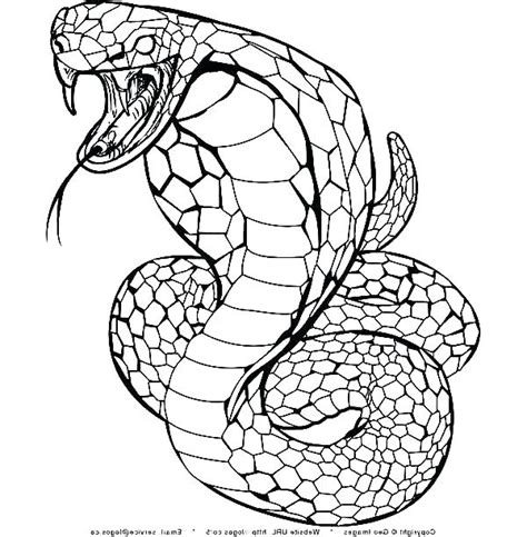 King Cobra Coloring Page at GetColorings com Free