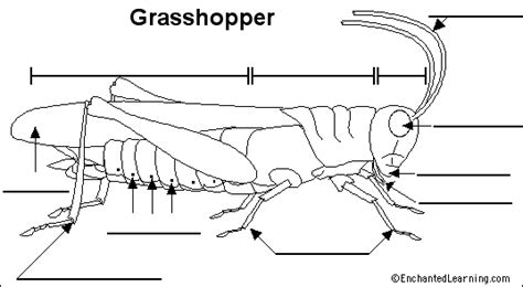 body parts activity webquest grasshoppers  crickets