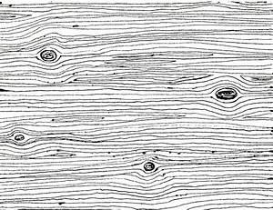Wood Grain Drawings images