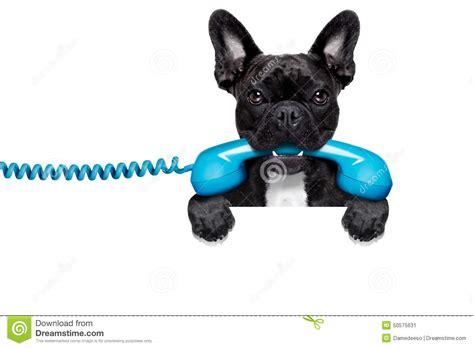 dog phone telephone stock image image  hear assistant