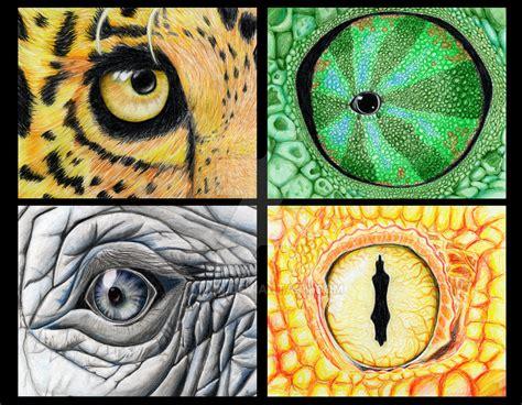 animal eyes  mimn  deviantart