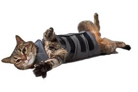 thundershirt for cats thundershirt relieves pets spooky scary anxiety