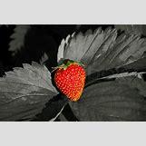 Clipart Fruit Bowl | 800 x 533 jpeg 83kB