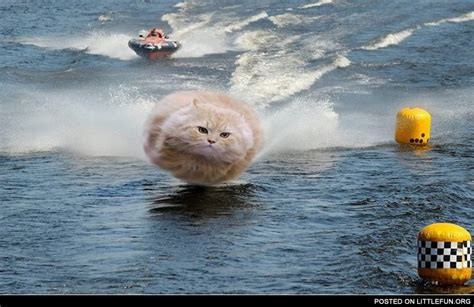 LittleFun - Hovercat at the boat racing
