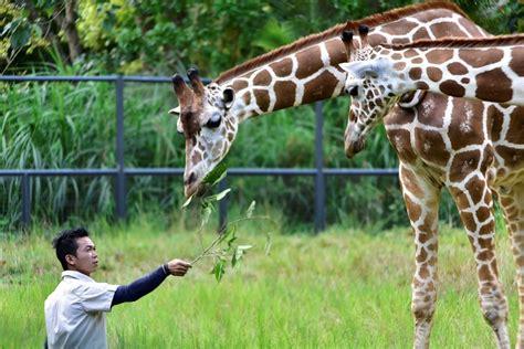 Cebu Safari & Adventure Park Private Day Tour   With Lunc...