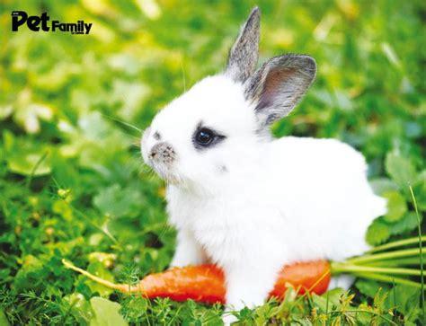 alimentazione conigli roditori alimentazione