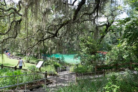 suwannee river motel fanning springs fl visit fanning springs a natural north florida paradise