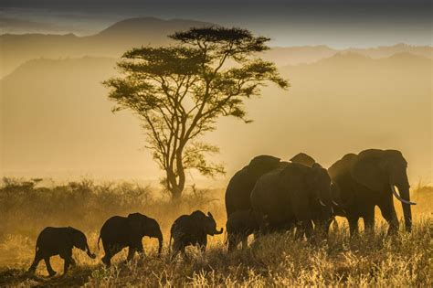 30 wildlife destination pictures from the Nat Geo travel ...