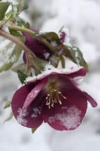 Winter Flowers Snow