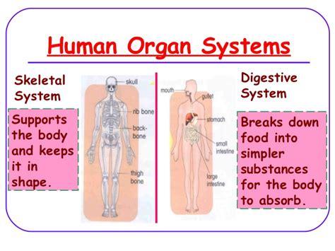 Human Organ Systems (lesson 2