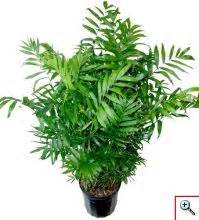 plants safe for cats 1000 images about houseplants safe for cats on