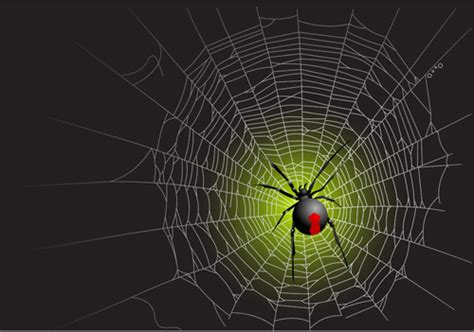 spider web design free spider web vector images free vector 4 635
