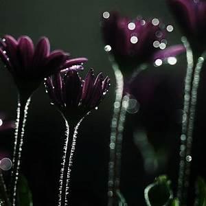 Purple flowers sparkling Good night | Flower ME | Pinterest