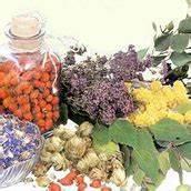 Лекарств травы от гипертонии