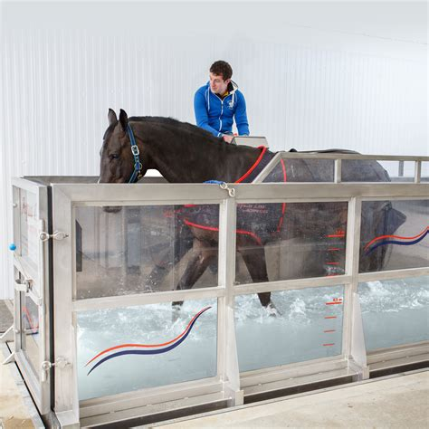 Equine Water Treadmill - FMBS Therapy Systems