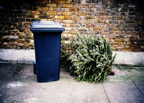 waste management christmas trees how to recycle your tree garden club