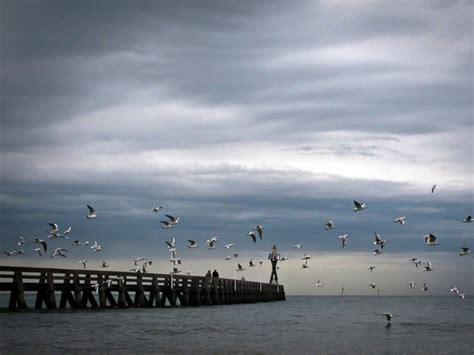 aquarium de courseulles sur mer normandie courseulles sur mer perle de la c 244 te de nacre geo fr