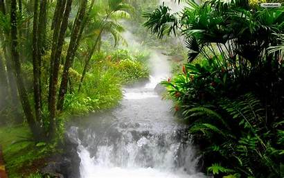 Nature Wallpapers Friendly Eco Beautifull Kinds Lovely