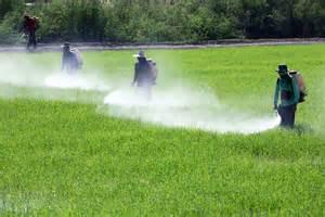 Résultat d'images pour Pesticides