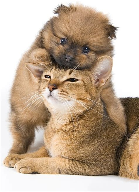 Cute Cat Dog Free Stock Photos Download (3,732 Free Stock