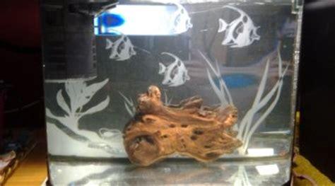 combien de poisson dans un aquarium combien de guppy dans un aquarium de 30 litres
