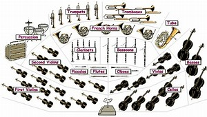 Image result for school orchestra instruments