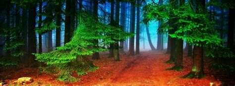 autumn forest facebook cover timeline photo banner  fb