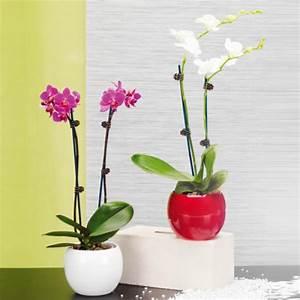 Orchidee Blüht Nicht Mehr : schmetterlings orchidee von aldi nord ansehen ~ Lizthompson.info Haus und Dekorationen