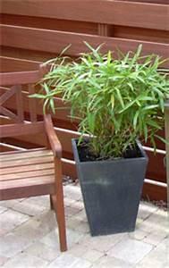 Bambou En Pot Pour Terrasse : tout sur le bambou ~ Louise-bijoux.com Idées de Décoration