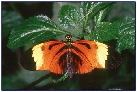 audubon butterfly garden and insectarium audubon butterfly garden and insectarium hours garden