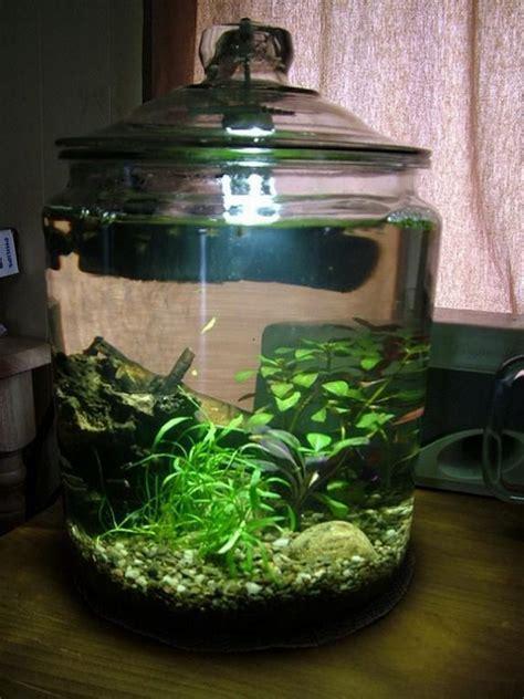 awesome aquarium  fish pond ideas   backyard  owner builder network